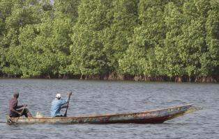 Mangrovenwald ist ein wichtiges Ökosystem